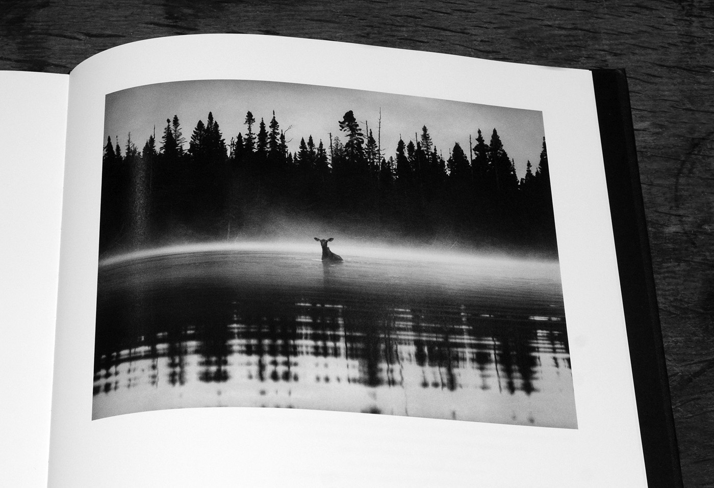 George Shiras-In The Heart Of The Dark Night-Éditions Xavier Barral-A Year In The Country-3