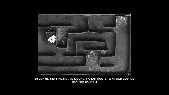 The Creeping Garden-film-documentary-2014-5