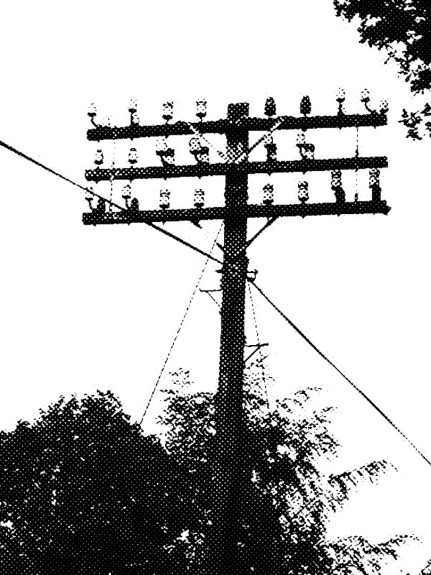 The Telegraph Pole Appreciation Society-A Year In The Country-2