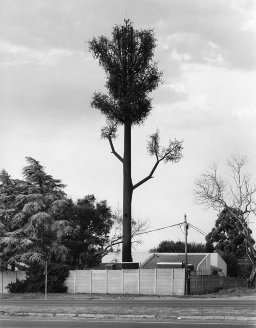 robert-voit-the-new-trees-a-year-in-the-country-3