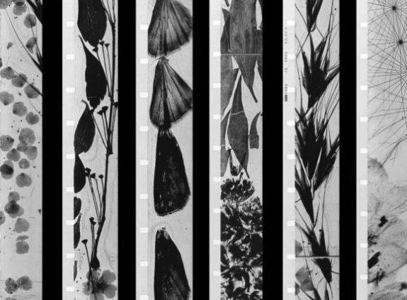 mothlight-1963-001-still-brakhage