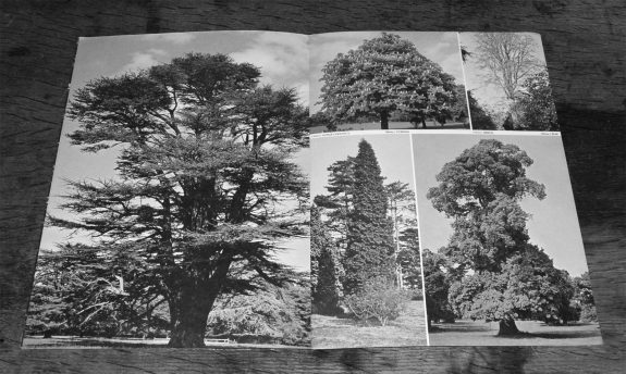 Plant a tree in 73-campaign-leaflet-bowaters guide to Britains most common trees-4