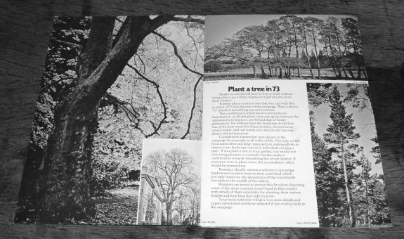 Plant a tree in 73-campaign-leaflet-bowaters guide to Britains most common trees-6